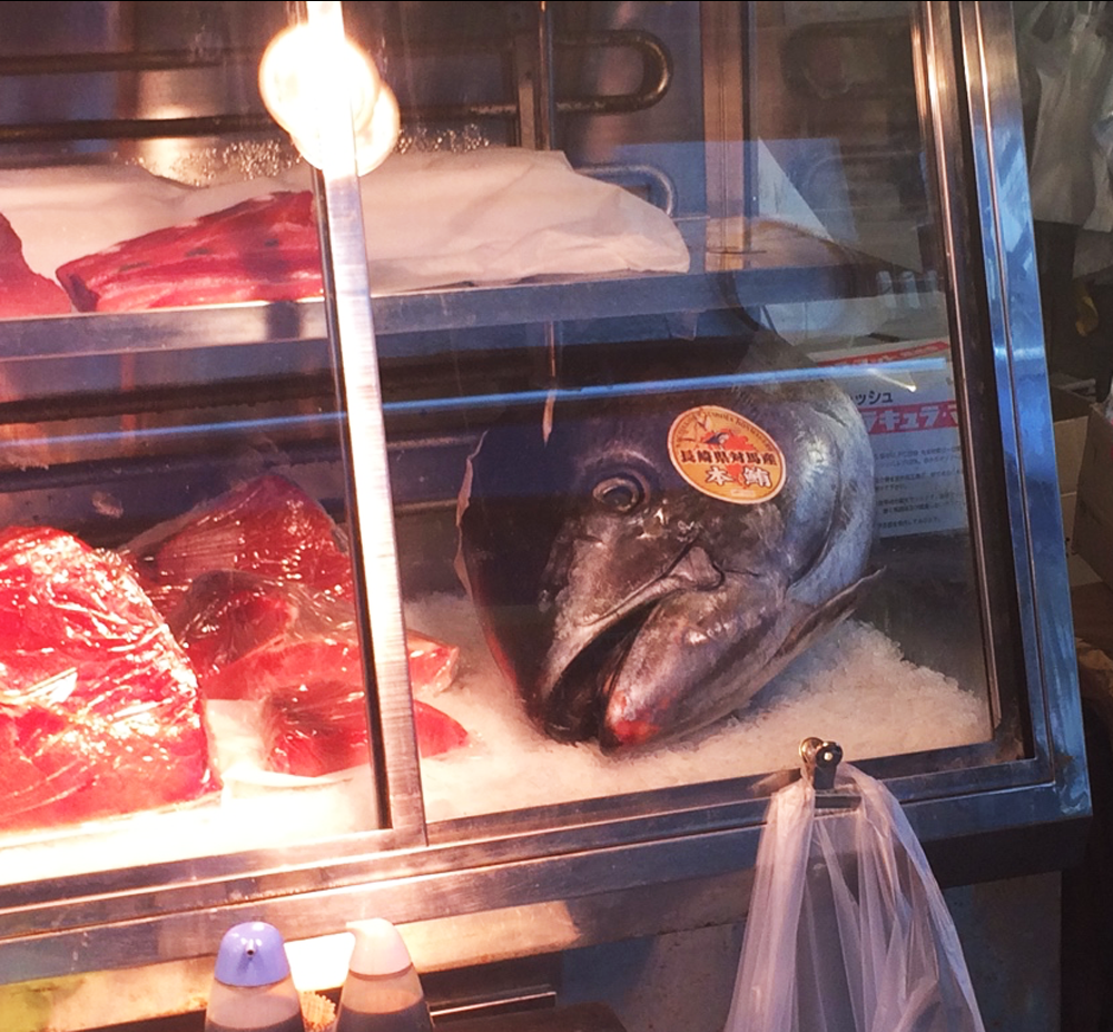 A big giant fish head in a case of ice at Tsukiji Market
