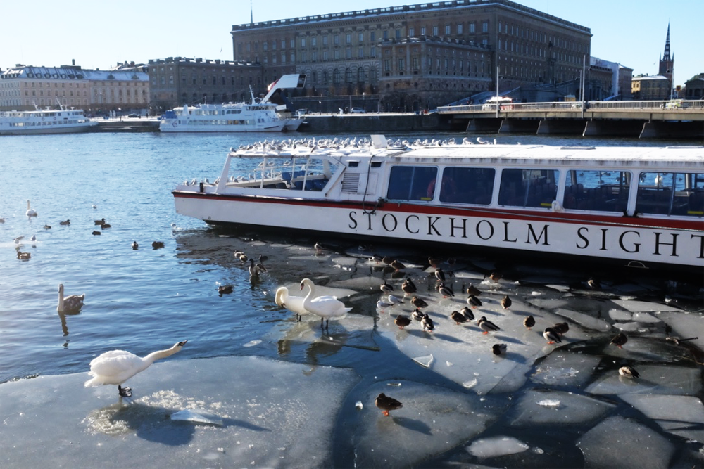 Stockholm Harbor, a boat, and swans on ice