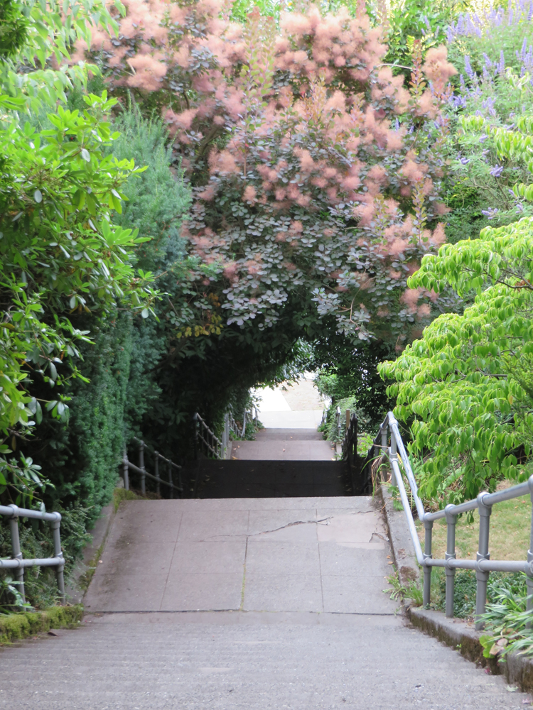 A most picturesque tree tunnel