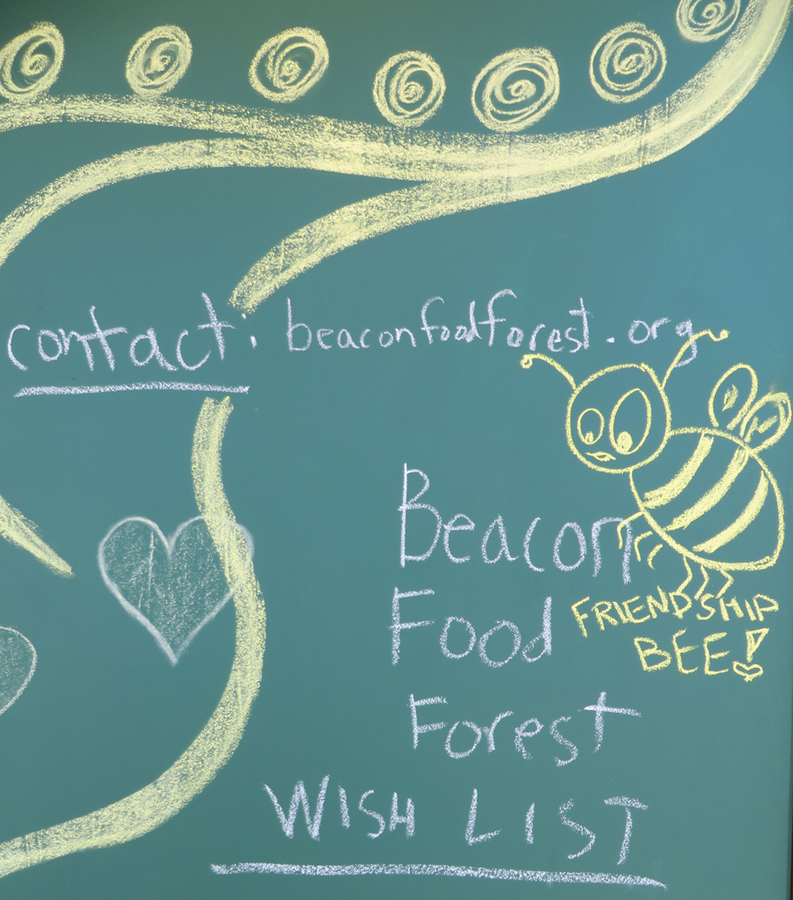food forest friendship bee