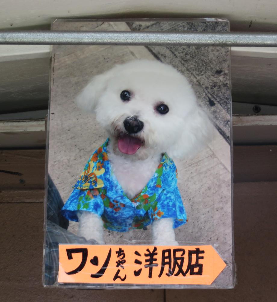 dog clothes 2