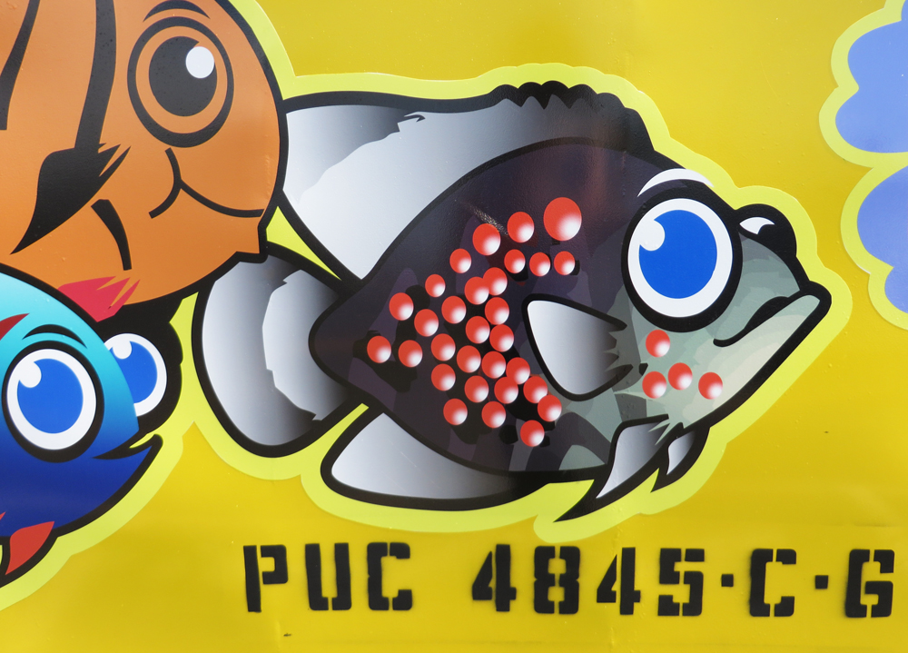 measles bus fish