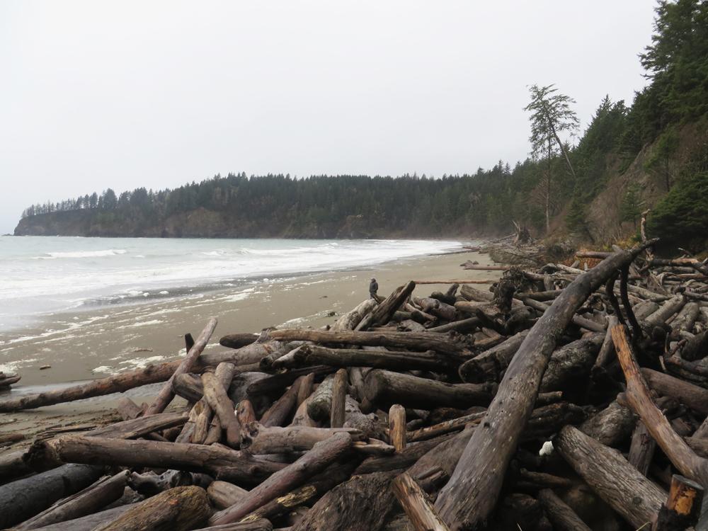 third beach driftwood