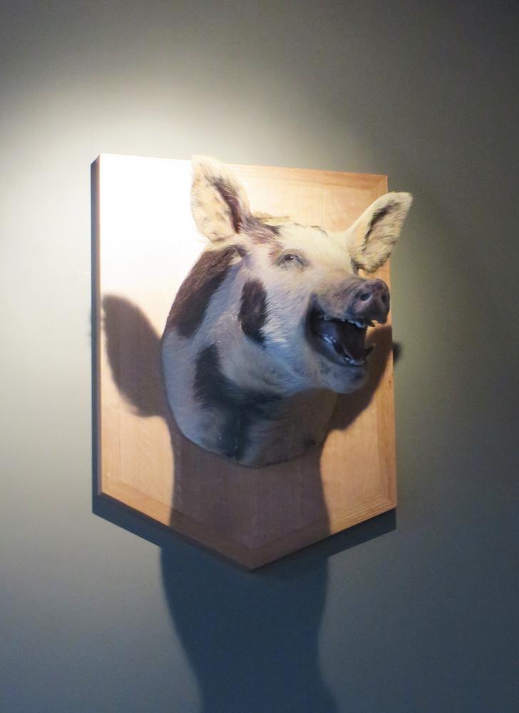 four barrels smiling pig nooooo