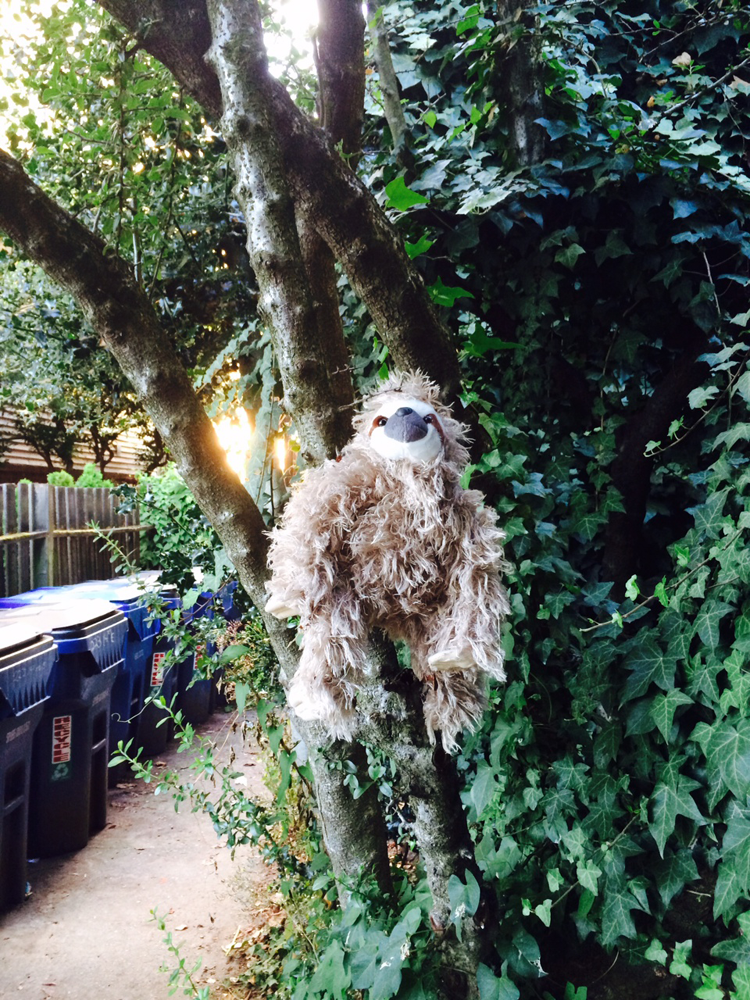 a stuffed sloth in a tree on 14th Ave on Capitol Hill in Seattle