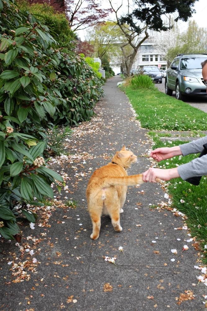 Street kitty in Ravenna