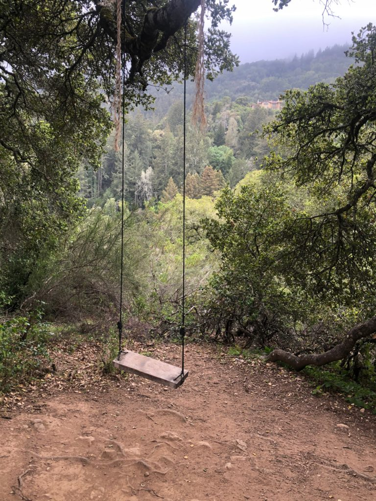 A swing hanging from a branch in front of a verdant wooded valley