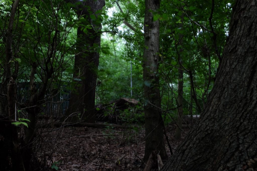 a dimly lit scene of the woods
